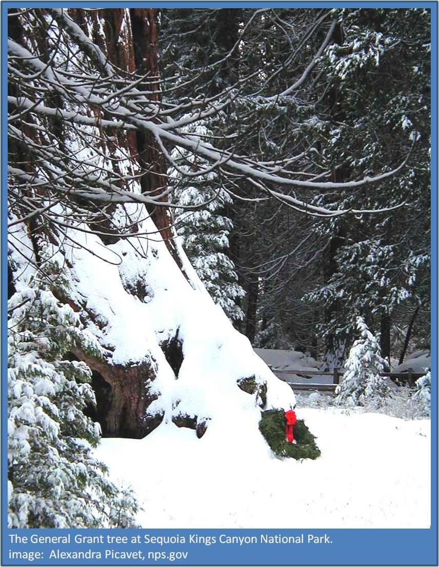 National Christmas Tree,