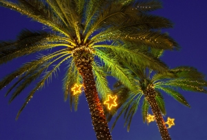 During Christmas season palm trees are decorated with lights in the Normandy Isle neighborhood in Miami Beach, Florida, USA
